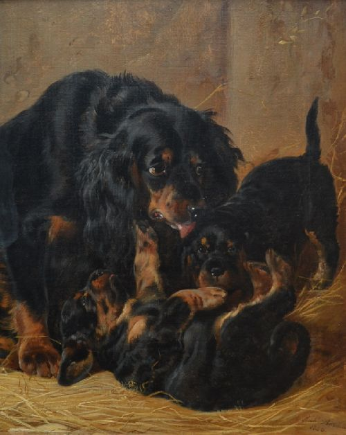 A Family of Gordon Setters
