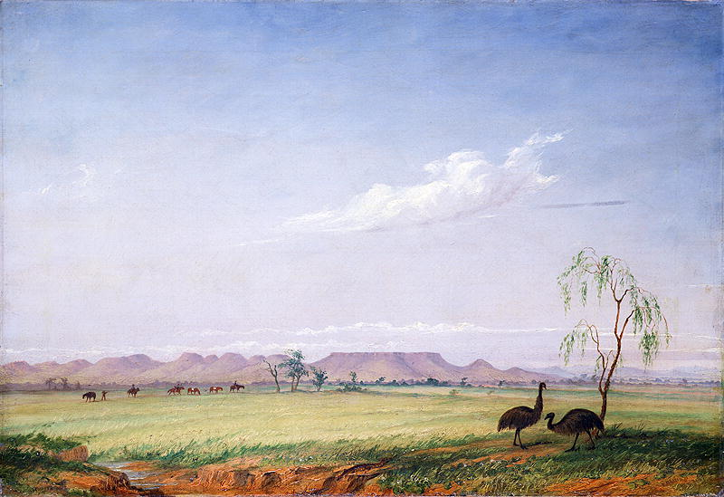 Emus on the Trap Plain