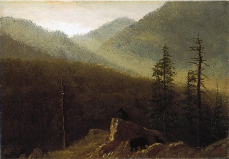 Bears in the Wilderness