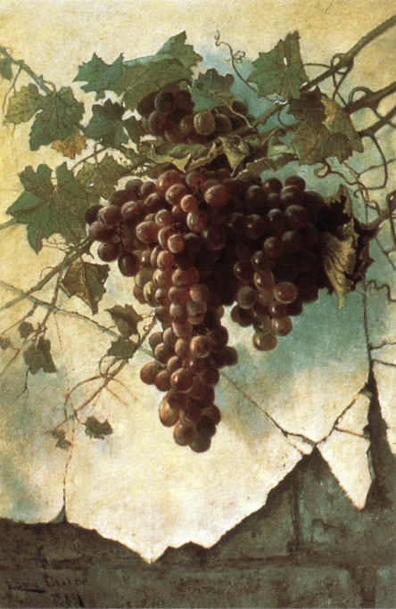 Grapes against a Mission Wall