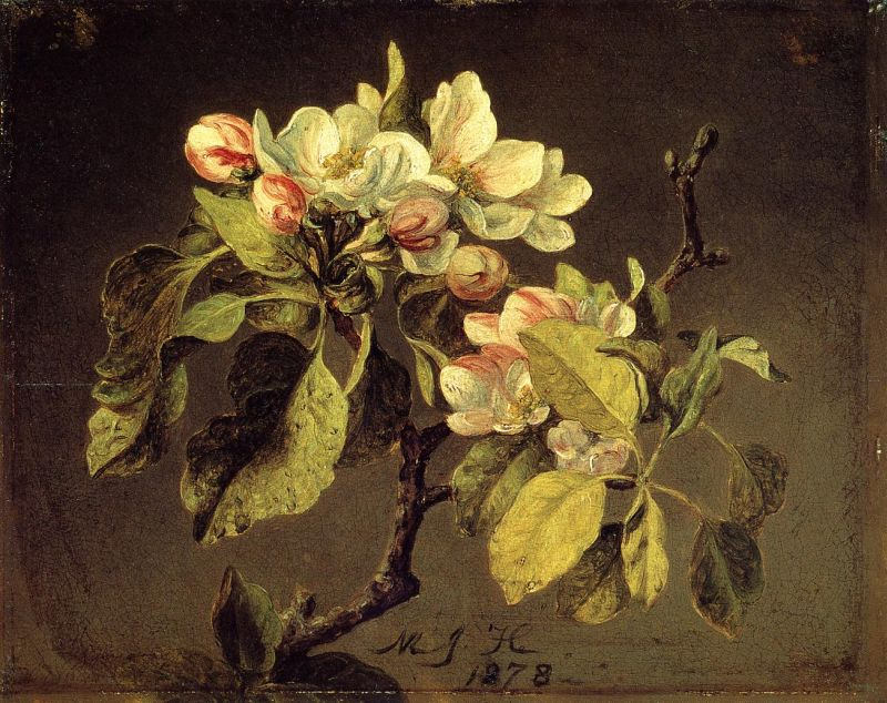 A Branch of Apple Blossoms and Buds