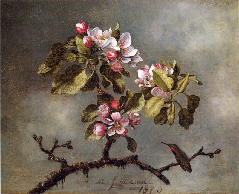 Apple Blossoms and Hummingbird II
