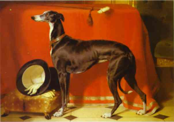 Eos, A Favorite Greyhound, The Property Of H. R. H. Prince Albert