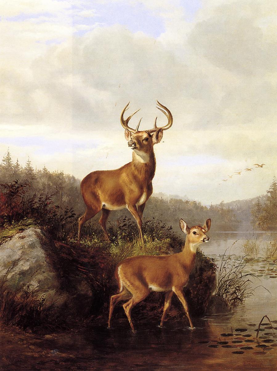 Deer Painting Artists