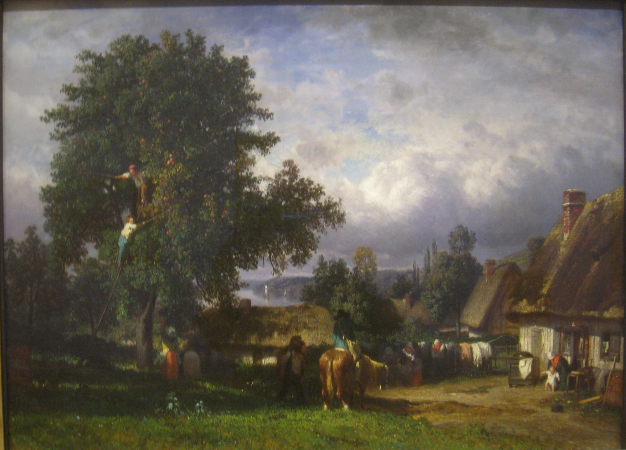 Apple Harvest in Normandy